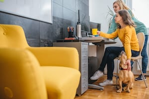 should pets be allowed at work
